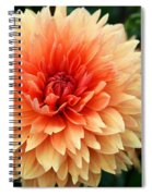 Sweet Dahlia Spiral Notebook