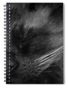 Sweet Dreams In Black And White Spiral Notebook