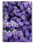 Sweet Dreams Of Purple Daisies Spiral Notebook