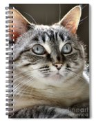 Sweet Innocence Spiral Notebook