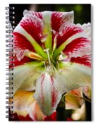 Sweet Like Candy Spiral Notebook