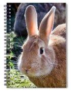 Sweet Little Bunny Spiral Notebook