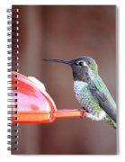 Sweet Little Hummingbird On Feeder Spiral Notebook