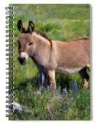 Sweet Miniature Donkey Spiral Notebook
