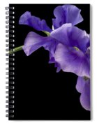 Sweet Pea Study Spiral Notebook