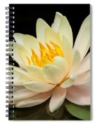 Sweet Peach Water Lily Spiral Notebook