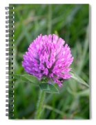 Sweet Pink Clover Spiral Notebook