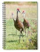 Sweet Sandhill Crane Family Spiral Notebook