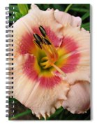 Sweet Sugar Candy Daylily Spiral Notebook