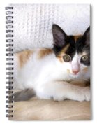 Sweet The Kitten Spiral Notebook