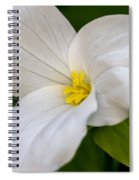 Sweet White Trillium 5 Spiral Notebook