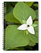 Sweet White Trillium Spiral Notebook