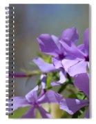 Sweet William Purple Wildflower Springtime Spiral Notebook