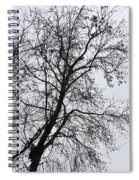 Sweetgum Silhouette On A Rainy Day Spiral Notebook
