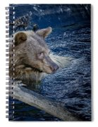 Black Bear On Blue Spiral Notebook
