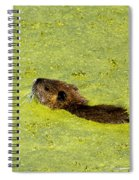 Swimming In Pea Soup - Baby Muskrat Spiral Notebook