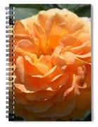 Swirling Peach Rose Spiral Notebook
