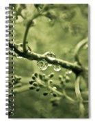 Swirly Spiral Notebook