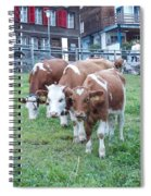 Swiss Cows Spiral Notebook
