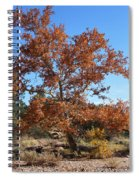 Sycamore Tree In Fall Colors Spiral Notebook