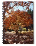 Sycamore Trees Fall Colors Spiral Notebook