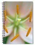 Symmetrical Flower Closeup Spiral Notebook