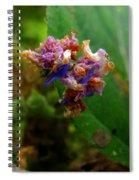 Synchlora Aerata Caterpillar 2 Spiral Notebook