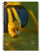 Syrphid Eyes And Antennae Spiral Notebook