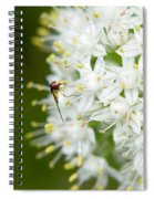 Syrphid Feeding On Alliium Blossom Spiral Notebook