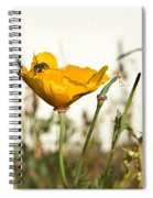 Syrphid Fly And Poppy 2 Spiral Notebook