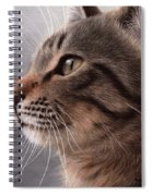 Tabby Cat Painting Spiral Notebook
