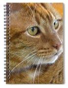 Tabby Cat Portrait Spiral Notebook