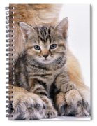 Tabby Kitten Between Large Dogs Paws Spiral Notebook