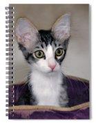 Tabby Kitten In A Purple Bed Spiral Notebook