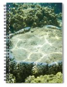 Table Top Coral Spiral Notebook