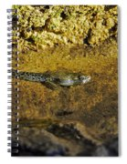 Tadpole Tail Spiral Notebook