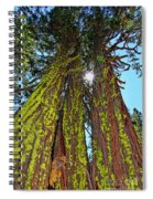 Tahoe Trees - Lake Tahoe By Diana Sainz Spiral Notebook