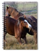 Tail Chasing Spiral Notebook