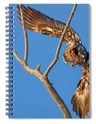Taking Flight - Immature Bald Eagle Spiral Notebook