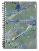 Talapia At Dawn Spiral Notebook