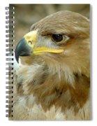 Tawny Eagle-11 Spiral Notebook