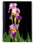 Tall Iris Spiral Notebook