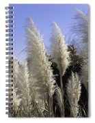 Tall Wispy Pampas Grass Spiral Notebook