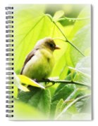 Tanager Spiral Notebook