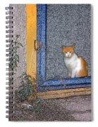 Taos Cat Spiral Notebook