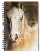 Taos Pony X Spiral Notebook