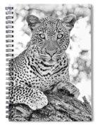 Tarangire Leopard Spiral Notebook