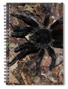 Tarantula Amazon Brazil Spiral Notebook