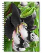 Tasmanian Bedevilled  Spiral Notebook