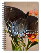 Tattered Tails Spiral Notebook